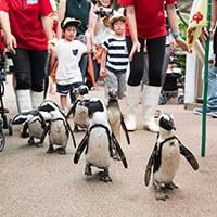ペンギンのイベント