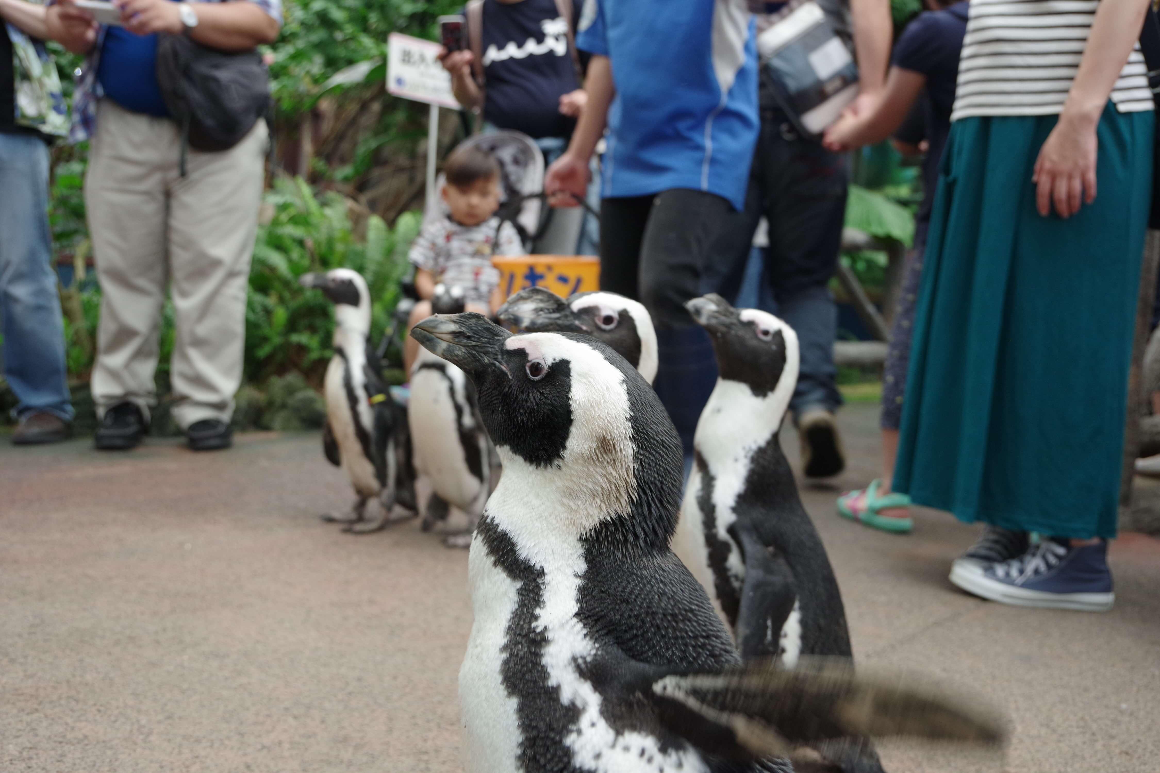 ペンギンウォーク