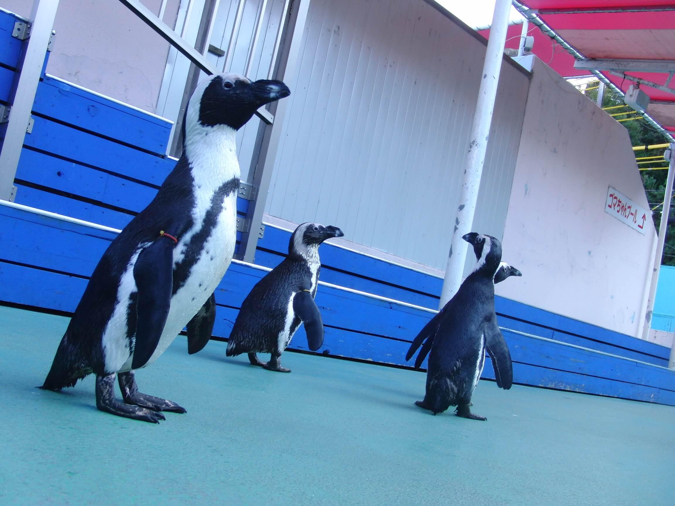 ペンギンとハイ!ポーズ